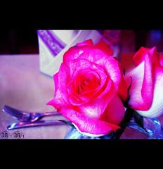 فعلا جمالك نادراً عن جدارهــ (M ï M ï) Tags: pink flowers water lunch one hotel 1 big open meeting fork مطعم فندق وردية شوكة foshya ورة