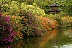 Pagoda (mauidaoust) Tags: nikon d200 soe blueribbonwinner favoritegarden eliteimages betterthangood goldstaraward worldwidelandscapes natureselegantshots jediphotographer panoramafotogrfico