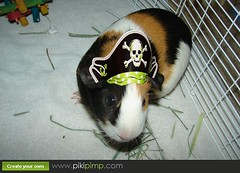 Guinea Pirate!