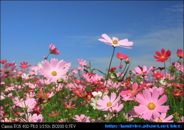 9711新社花海+安妮_010.jpg