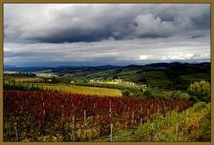 TOSCANA (TIZIANO BORELLI) Tags: europa italia toscana autunno konicaminolta fiatlux tiziano vigneti dynax5d montespertoli borelli goldstaraward natureselegantshots