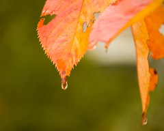 """Stop crying I""""ll see you next year (Southsidedean) Tags: tree fall d8 08 colourlicious"""