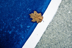 (uwajedi) Tags: blue autumn white toronto ontario canada fall hockey wet water dead photo leaf paint metro contest cement stripe dry ground rink vote challenge thebeaches
