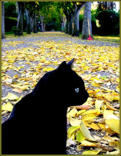 Autumn through a cat's eyes - O Outono pelos olhos de uma gata by * starrynight1.