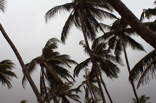 Gorai Palms