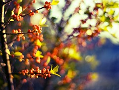 Bokehdots (mjmatt) Tags: autumn sunset berries bokeh naturesfinest hbw bokehdots bokehdot