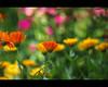 Nostalgia (Pepix2007) Tags: flores primavera nikon colores explore nostalgia junio recuerdos ogm naturesfinest añoranza outstandingshots flickrsbest platinumphoto colorphotoaward impressedbeauty theunforgettablepictures excellentsflowers multimegashot vacacionesjunio2008 micartttt thebestofmimamorsgroups capturethefinest worldsartgallery