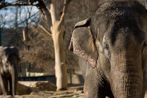 Пражский зоопарк, слоны