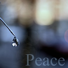 Wishing you peace, love, and joy this Holiday Season (Maureen F.) Tags: season holidays peace bokeh drop minimal ornament precious happyholidays sorryitsapostandrun