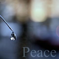 Wishing you peace, love, and joy this Holiday Season (Maureen F.) Tags: season holidays peace bokeh drop minimal ornament precious happyholidays sorryitsapostandrun