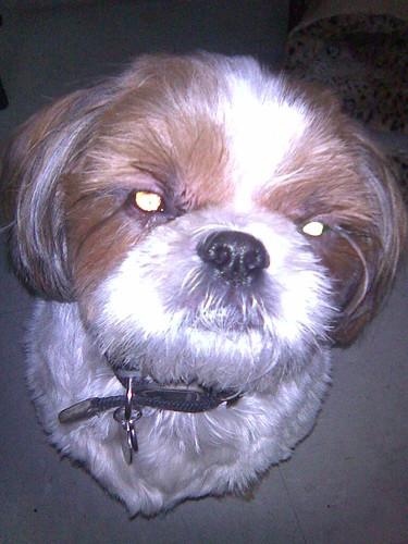 evil-eyed Wonton