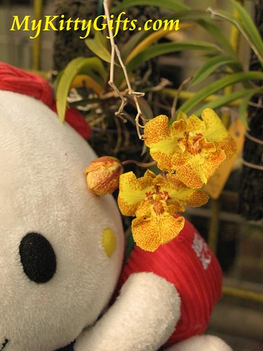Hello Kitty's View of Yellowish Orchid with Red Dots in Hong Kong Orchid Trip
