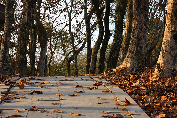 關仔嶺紅葉公園12