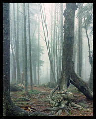 The Old Forest (Gary Rosenberg) Tags: landscape thesecretlifeoftrees largeformatlandscapelargeformat