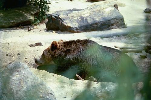 Bronx Zoo, 2001