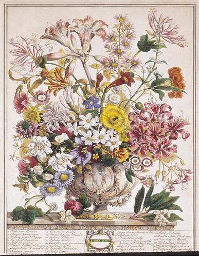 010- Octubre- Los doce meses del año en flores