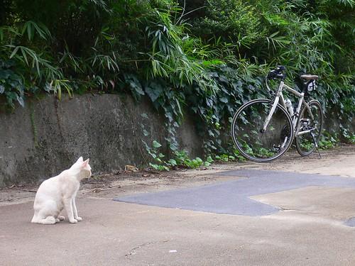 いい自転車だニャ