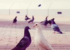(mrami-q8 ) Tags: canon pigeon center kuwait scientific 500d mramiq8