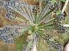 DSC00350 (Jaimir Marcon Fotografias) Tags: fauna flora plantas natureza imagens animais fotografo bacurau bentivi jaimir jaimirimagens naturezagaucha