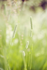 Vardag (AChristiansdotter) Tags: summer colour green nature 35mm nikon calm harmony everyday d90