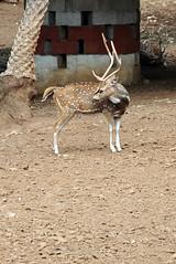 mysore zoo 12