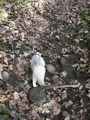 Pua walk
