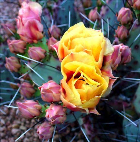 Avalon's gardens - Page 2 2396496816_5c9bf1e7fd