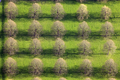 Linden trees (Aerial Photography) Tags: park trees shadow green by germany garden munich de bavaria spring order linden row aerial m 20 fabulous luftbild luftaufnahme obb nemeton flickrbestpics 27042008 1ds03460 hochberbayern2