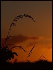 Good Night (Kirsten M Lentoft) Tags: sunset silhouette firstquality fpg outstandingshots bej mywinners platinumphoto colorphotoaward momse2600 diamondclassphotographer flickrdiamond magicdonkeysbest kirstenmlentoft magicunicornverybest