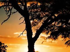 pr-do-sol (Edison Zanatto) Tags: sunset brazil naturaleza sun tree sol southamerica nature silhouette yellow braslia brasil backlight jaune sunrise landscape atardecer soleil natureza natur paisaje paisagem amarillo amarelo prdosol gelb giallo rbol  silueta crpuscule landschaft sonne rvore paesaggi ocaso sonneuntergang alvorada controluce anochecer anoitecer coucherdesoleil nikonn90s crepsculo nascente contrallum silhueta puestadelsol americadosul poente puestas fimdetarde luscofusco sdamerika centrooeste dilculo postadelsol fujicolorprovalue200 filme35mm regiocentrooeste crepsculovespertino postadosol continentesulamericano edisonzanatto