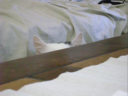 Peek-a-booo