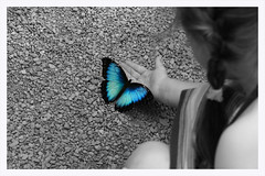 Butterfly-Girl (Eddy.H) Tags: blue macro nature eh colors beautiful animal animals closeup fauna canon butterfly insect shot magic awesome butterflies sigma awsome lepidoptera butterly stunning morpho moment makro insekt echte nahaufnahme tier schmetterling butterflys potofgold 70mm insecta hobbyphotograph 400d tagfalter aplusphoto fluginsekten macrolife schmetterlingshaussayn