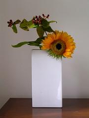 Linda's Ikebana (l1nda1) Tags: flower ikebana c sunflower flowerarrangement sogetsu japaneseflowerarrangement ilovemypics loveartflowers awesomeblossoms altfloresporlapaz