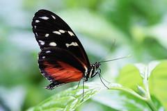 Polkadot (laurarnmd) Tags: naturesfinest theenchantedcarousel