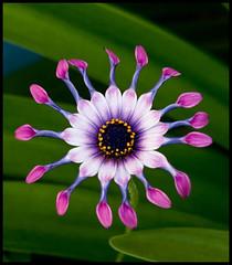 Unusual Flower-1&