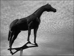 The Black Horse (The Voice of Eye) Tags: sculpture horse usa history beautiful animal advertising outdoors photography newjersey fineart culture documentary surreal symbolic noble greyscale blackhorsepike actuality haddonheights environmentalportraiture craigmorse culturesubculture blackandwhiteblackandwhitebw winter2008 delbuonosbakery blancoynegroblancoynegro haddonheightsnewjersey thevoiceofeye neroebianconeroebianco noiretblancnoiretblanc pretoebrancopretoebranco schwarzesundweischwarzesundwei zwarteenwitzwarteenwit