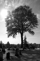 Evergreen cemetery tree (ldysw357) Tags: tree cemetery pa gettysburg evergreen