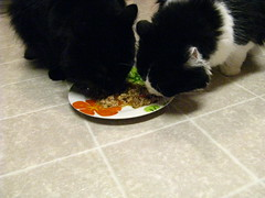 Huggy and Josie share a plate