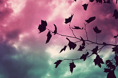 Autumn Flickr (photographer padawan *(xava du)) Tags: autumn sky cloud tree contraluz hojas arbol leaf flickr colours cloudy colores cielo nubes gradient estacion otoo ramas adiccion adict backligth xava safarilpcitytour xvfp