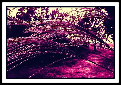 pink october foliage