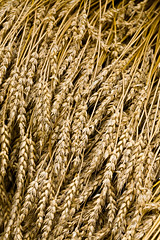 Wheat (Raoul Pop) Tags: canon virginia flickr unitedstates harvest farms grains mountvernon smugmug canoneos5d sheaves googlephotos pubrp