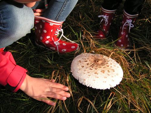 'kijk juf, wat een mooie paddenstoel'