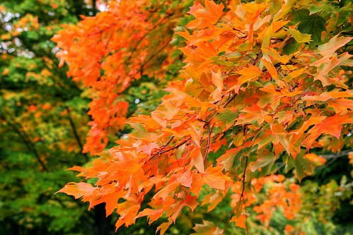 A burst of Autumn Orange