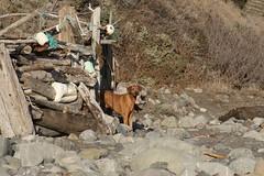 IMG_1922 (kspaulding) Tags: shanty kito lostcoasttrail cooskiecreek