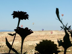 Hot air balloons and flowers, Cappadocia, Turkey