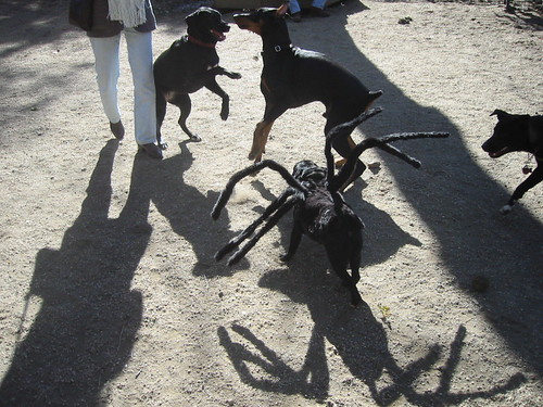 Spider-Dog with other dogs