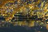 Høst (fotomormor) Tags: steinsfjorden høstløv blader vann photofaceoffwinner pfogold babymomma thumbsup pfoplatinum thechallengefactory photofaceoffplatinum yourock bigmomma hero winner herowinner høst autumn fall ultrahero speilbilde reflection ultraherowinner gamewinner pregamewinner fotocompetition fotocompetitionbronze gamex2winner gamex3winner