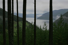 Fine floating mist at Myrdal, Norway  Rob Watkins 2006 (Aland Rob) Tags: trees light cliff cloud mist mountain tree nature water beauty norway fog contrast forest dark sailing moody shine bright gap floating shade edge fjord brooding float drama myrdal photographrobwatkins