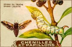 chenille 2