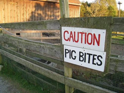 Pig Bites Sign